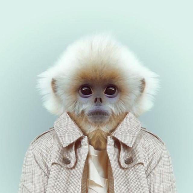 Fashion-Zoo-Animals9