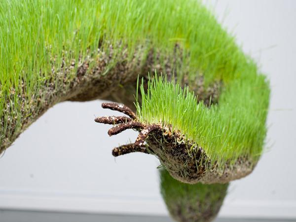 life-of-grass-15