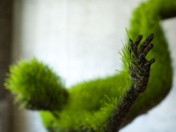 life-of-grass-2