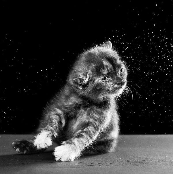 carli-davidson-shake-animal-photography11