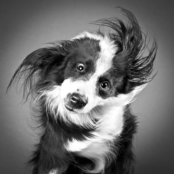 carli-davidson-shake-animal-photography3