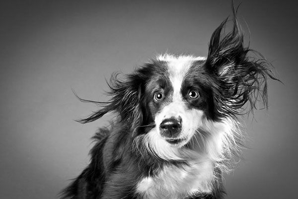 carli-davidson-shake-animal-photography4